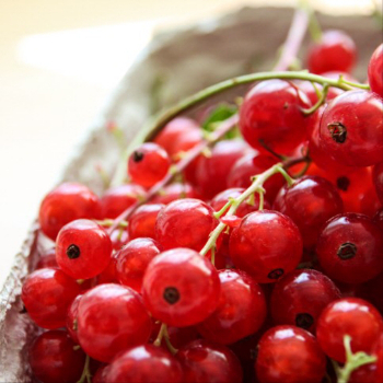 Fresh redcurrants :: The Scandinavian Baker